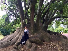 In Albert Park (NettyA) Tags: nz newzealand auckland appleiphone6 2017 city northisland albertpark tree
