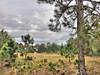 Miramar Pineland Park 04-20180120 (Kenneth Cole Schneider) Tags: florida miramar miramarpinelandpark