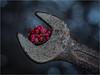 """16 key _ MacroMondays _ """"Speckled"""" (Werner D.) Tags: color bokeh dof unschärfe kontrast contrast speckled macromondays domiplanf2850mm depthoffield"""