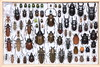 IMG_9922 (Easyparadise) Tags: beetle collection coleoptera metal color insect nature animal scarab specimen macro entmology museum biodiversity 昆虫 甲虫