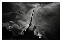Lo strappo (GP Camera) Tags: nikond7100 nikonafsdx18105mmf3556gedvr rip strappo sheet telo plastic plastica light luce shadows ombre lightandshadows lucieombre lighteffects effettidiluce textures trame shades sfumature details dettagli abstract astratto focus messaafuoco vignetting bw biancoenero monochrome monocromo whiteframe cornicebianca italy italia piemonte monferrato darktable gimp opensource freesoftware softwarelibero digitalprocessing elaborazionedigitale