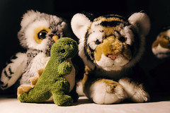 Adventures and Friends (xockisfriends) Tags: animal animals tiger owl dinosaur tigèr petèr science enjoyment friends light evening relax relaxing wild 50mm color