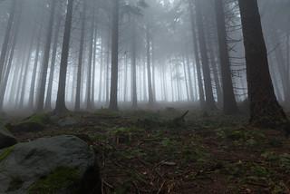 Grüner, dunstiger Wald