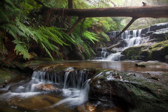 The Waterfalls Of The Blue Mountains || NSW || AUSTRALIA (rhyspope) Tags: australia aussie nsw new south wales blue mountains canon 5d mkii leura creek stream river water waterfall jungle forest woods rainforest green fern rhys pope rhyspope rocks tree nature travel tourism awesome