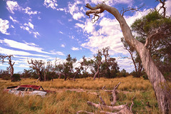 Broken, crushed, twisted and dried fields... (Joshua Perera Photography) Tags: sony a7r sigma 24mm f28 grass field bushland trees tree twisted car crushed dry digital landscape clouds sky