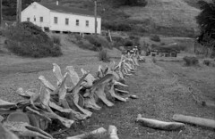 Whale Bones (delge) Tags: kodak kodaktmax100 tmax100 tmax canon canon1n whale bones fossils marin