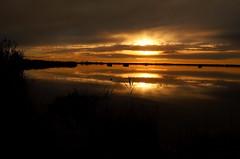 Would you like a sunset? (LaDani74) Tags: landscape nature lake lagodimassaciuccoli oasilipu sundown sunset tuscany italy sigma1750 canoneos760d reflections sky clouds