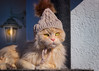 She said that it's very cold outside .... (FocusPocus Photography) Tags: linus katze kater cat chat gato tier animal haustier pet winter kalt cold mütze hat wollmütze woollyhat bommel pompom