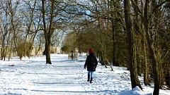 P1070934 Nature temps de neige 72 (personne) -Corra (jeanchristophelenglet) Tags: saintgermainenlayefranceétangducorraforêtdesaintgermainenlaye arbreforêt foresttree florestaarvore neige snow neve