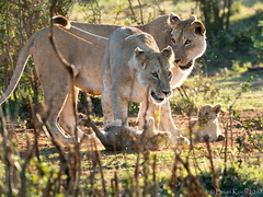 _4292180.jpg (Brian 330 in South Africa) Tags: