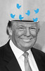 Tweet Tweet (Lightcrafter Artistry) Tags: politics twitter trump photoshop satire
