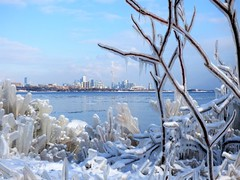 #LetThereBeLight (mrsparr) Tags: toronto ontario canada humberbayparkeast skyline skyscrapers cntower ice icicles icelandscape iceformations snow water lakeontario lake branchescoveredinice lettherebelight flickrfriday winter landscape panasonic fz72 outside outdoors outdoorphotography frozen wasser vatten himmel bay natur stad istappar is panasoniclumix vinter