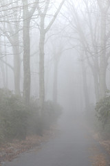Wrong Turn (Chancy Rendezvous) Tags: fog mist paxton trees path road moorestate park weather damp winter creepy woods spooky zombie