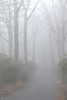 Wrong Turn (DaveLawler) Tags: fog mist paxton trees path road moorestate park weather damp winter creepy woods spooky zombie