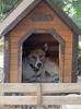 "Walk to 64-001 (photozaki) Tags: ""dogs cats"" dog dogs inu cat cats neko shikoku japan ohenro88 ohenro pilgrimage"