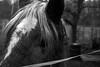 Ich trau dir nicht (Jannik (JB)) Tags: pferd koppel weide schlamm zaun tier tiere schwarz weis weiss sw
