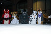 NFC2018-Weekend-1 (Wolfie Fox) Tags: nordicfuzzcon furry convention fursuits sweden stockholm scandic snow nfc2018