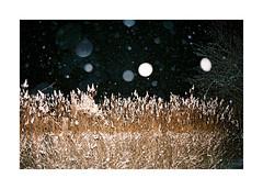 Winter Breath by Punkroyaltiger - Film