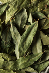 Raw Dry Organic Laurel Leaves (brent.hofacker) Tags: aroma aromatic background bay bayleaf bayleaves branch condiment cooking dry flavor food fresh freshness garden green healthy herb herbal ingredient laurel laurelleaf laurelleaves laurus leaf leafs mediterranean natural nature nobody nutrition organic plant seasoning spice spices taste vegetable