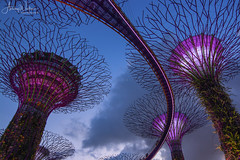 Supertree Grove (Ashley Wallace - Touchdown Aviation) Tags: longexposure twilight night travel colour blue clouds sky flickr fisheye wideangle nikon photography lights tree garden design manmade supertreegrove gardensbythebay asia singapore