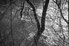 dscf2759jpg_16732960946_o (idreamedof) Tags: cairngormsnationalpark highlandsofscotland scotland scottishhighlands spey uk atmosphere flood flooded nature plants tree trees water weather