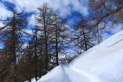 Ovronnaz (bulbocode909) Tags: valais suisse ovronnaz montagnes nature arbres mélèzes nuages neige hiver bleu paysages