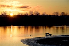 _DSC4623       Tranquil (christinachui79) Tags: nikond750 serenity landscapephotography peaceful naturephotography waterscapephotography lowtide watersacpe shore digitalcamera flickrnature dawn sunrise landscape nature reflections flickr beautiful winter morning nikon d750 golden tranquil serene silhouette