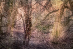In the park (RCARCARCA) Tags: grass shadows copse verulamium stalbans photoartistry woods trees verulamiumpark 5diii leaves canon branches 2470l light