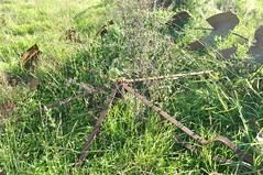 Dilapidated 14 foot IBC Geared Simplex windmill; Wutul, Queensland, Australia. (sarracenia.flava) Tags: ibc geared simplex windmill queensland australia intercolonialboringcompany