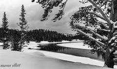 River Curves (maureen.elliott) Tags: blackandwhite balckandwhitephoto landscape winter river trees mountains curves snow nature yellowstonenationalpark wyoming