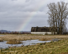 021718 Between Showers (wildcatlou) Tags: nisquallynationalwildliferefuge barns rainbow winter pond water clouds nature landscape