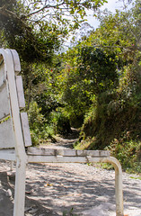 Care to take a seat by the path? (benjamin.t.kemp) Tags: nature path bench calm ecuador relax walk