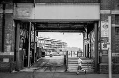 Sydney (Bill Thoo) Tags: rokkorm40mm cle minoltacle minolta monochromefilmphotography monochromefilm lackandwhitefilmphotography blackandwhitefilm iso400 tmax400 kodak 35mmfilmphotography 35mmfilm 35mm analogphotography filmphotography analog film walshbay blackandwhite bnw monochrome wharf pier city urban street landscape australia newsouthwales nsw sydney