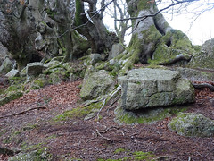 """""""Pudding"""" Stone, Belle Vue Lane, Upper Cwmbran 22 February 2018 (Cold War Warrior) Tags: stone puddingstone conglomerate cwmbran cistercians"""