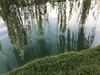 Pond with lush foliage (annaaltenburger) Tags: greengrass summer tranquility calming weepingwillowtree trees reflections reflecting water green pond lake