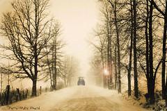 """Routes de campagne ... ( P-A) Tags: brouillard arbres buée campagne fermes humidité météoclémente neige nuageux route pontiac cheminelmquébec hiver tracteur animaux granges photos simpa© """"nikonflickraward"""" naturessilhouettes"""