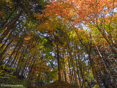 forest (Valeria Santacaterina) Tags: forest wood trees coloriautunno colors legno leaves foresta bosco loveforest landscape paesaggio nature light