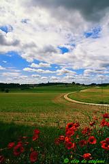 voglia di primavera (elio de stefani.) Tags: primavera collinemorenichedelgarda collinemoreniche nuvolebianche paesaggi papaveri poppye immaginieliodestefani