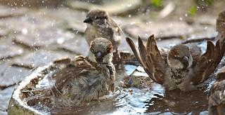Bathing season has begun