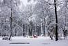 Sous la neige - (Noir et Blanc 19) Tags: iledefrance neige forêt jeux sony a77