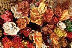 Flores do Cerrado, Brasília (Francisco Aragão) Tags: flores canong7xmkii franciscoaragão fotografo dia cores df brasilia brasil planaltocentral fotografia artesanato floressecas artwork cerrado biomacerrado brazil capitaldobrasil planopiloto centrooeste distritofederal artesanía handicraft