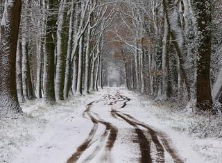 On a snow walk in the neighbourhood (8)