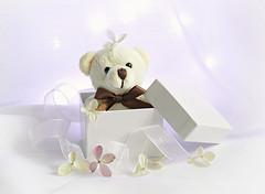 Out of the box (Through Serena's Lens) Tags: stilllife lifeisarainbow white blanco ribbon hydrangeas flower box cute