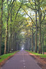 Into the woods (nikos__pot) Tags: road forest green wood fresh air colours tree grass park walk calmness relaxing