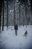 HM2A7507 (ax.stoll) Tags: feldberg frankfurt taunus mountain forest snow winter winterwonderland outdoor nature dog hovawart trees street wanderlust travel