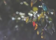 kaleidoscope (rockinmonique) Tags: leaves colour bokeh sparkle pretty red yellow blue green moniquew canon canont6s 50 mm copyright2018moniquewphotography