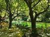 Fontaine de Vaucluse (sami 51) Tags: fontaine devaucluse sorgue rivière eau verte arbres provence sud france french