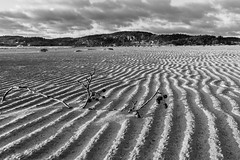 beachlines (englishgolfer) Tags: sweden sverige west coast västkusten ljungskile lyckorna beach winter cold nikon d7500 tamron 1750mm bw black white monochrome