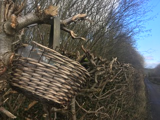 basket in the hedge