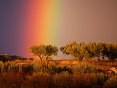 L'Arc de Sant Martí pinta l'arbre (rferrer7) Tags: rainbow arcdesantmartí arcoiris arciris colors pluja lluvia rain